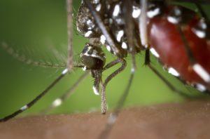 Wie Stechen Mücken