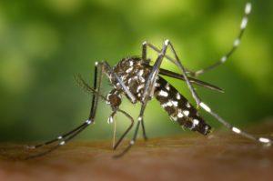 Icaridin gegen Mücken