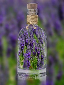 Lavendelöl gegen Mücken