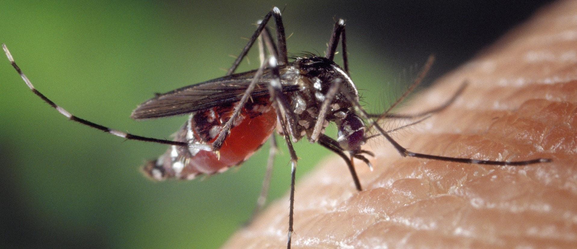 Mückenstichen vorbeugen