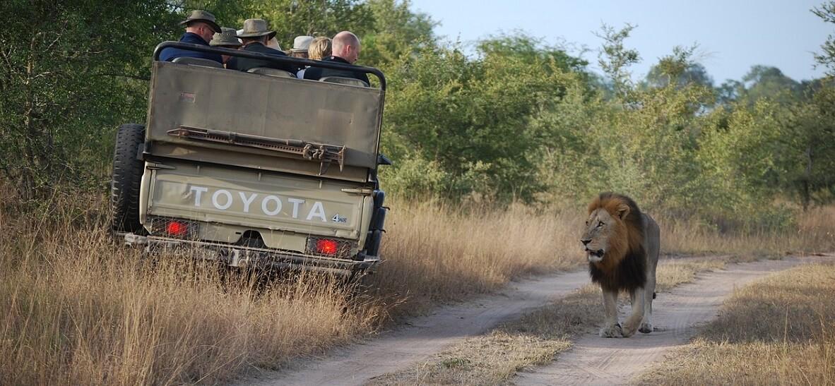 Safari Kopfbedeckung